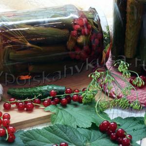 Огурцы маринованные с красной смородиной